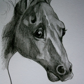 Whistlejacket (After George Stubbs). Pencil on Paper. 2014.